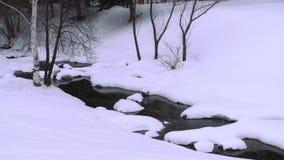 与桦树的冬天横向 影视素材