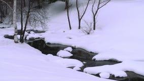 与桦树的冬天横向 股票视频