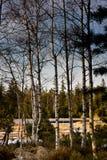 与桦树的湖视图 库存照片