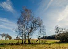 与桦树的秋天领域 免版税库存照片