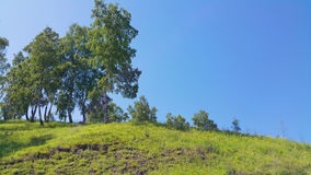 与桦树的西伯利亚小山 库存图片