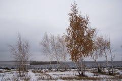 与桦树的风景在多云天气 并行 在秋天季节的第一雪 免版税库存照片