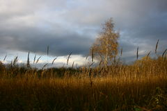 与桦树的overcoast风景 库存图片
