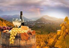 与桶的白葡萄酒在著名葡萄园在瓦豪,波美丝毛狗,奥地利 图库摄影