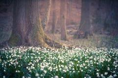 与梦想的幻想的美丽的春天花弄脏了bokeh背景 新鲜的室外自然风景墙纸 免版税图库摄影