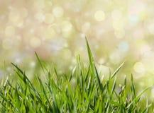 与梦想的bokeh的绿草背景 免版税库存照片