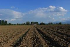 与棉树的领域 棉树起动生长 免版税库存图片
