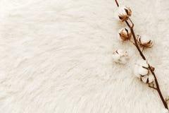 与棉花的平的位置构成 博客作者概念 免版税库存图片