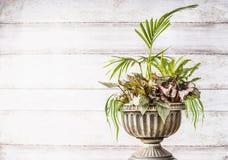 与棕榈、草和叶子秋海棠可爱的植物的美好的露台缸大农场主安排在白色木背景,正面图 库存照片