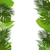 与棕榈、蕨、monstera和香蕉叶子的热带叶子背景 免版税库存照片
