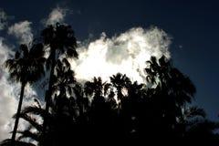 与棕榈剪影的剧烈的热带夜空反对黑暗的天空的与风雨如磐的云彩 库存图片
