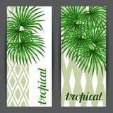 与棕榈叶子的横幅 装饰棕榈树livistona rotundifolia图象热带叶子图片