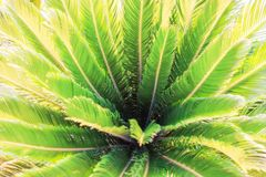 与棕榈叶子的自然被弄脏的绿叶热带背景 免版税图库摄影