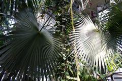 与棕榈叶的异乎寻常的背景 库存图片