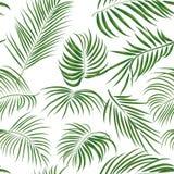 与棕榈叶的无缝的手拉的热带样式,在白色背景的密林异乎寻常的叶子 图库摄影