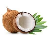 与棕榈叶的椰子 免版税库存照片