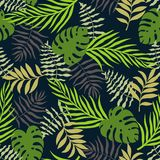 与棕榈叶的热带背景 无缝花卉的模式 S 图库摄影
