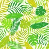 与棕榈叶的热带背景 库存照片