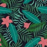 与棕榈叶的热带背景 库存图片
