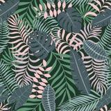 与棕榈叶的热带背景 图库摄影