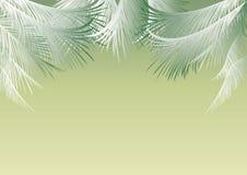 与棕榈叶的背景 皇族释放例证