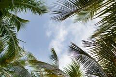 与棕榈叶的蓝天 库存图片