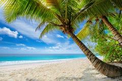 与棕榈和一艘帆船的美丽的含沙加勒比海滩在绿松石海 免版税库存图片