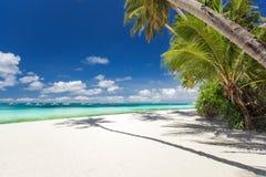 与棕榈和白色沙子的热带海滩 免版税库存图片
