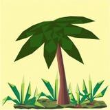 与棕榈和仙人掌的低多风景 图库摄影