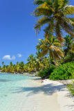 与棕榈树、水晶水和白色沙子的加勒比海滩 库存图片