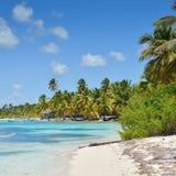 与棕榈树、水晶水和白色沙子的热带海滩 库存图片