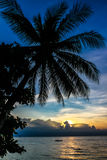 与棕榈树剪影的不可思议的五颜六色的日落 免版税库存照片