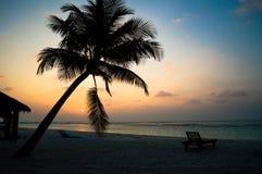 与棕榈树剪影的热带日落。 免版税库存图片