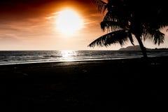 与棕榈树剪影的热带日落 免版税图库摄影
