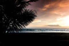 与棕榈树剪影的热带日落 免版税库存照片