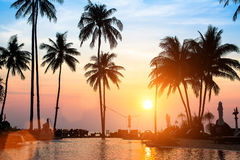 与棕榈树剪影的美好的日落  免版税库存照片