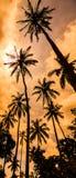 与棕榈树剪影的黄光日落 库存图片