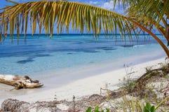 与棕榈树叶子、水晶水和白色沙子的加勒比沙子海滩 图库摄影