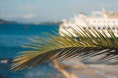 与棕榈树叶子的抽象夏天背景 库存图片