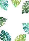 与棕榈树照片的模板库存免水彩叶子版税cad没有多的点段线绘制图片