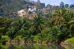 与棕榈树和乡下的泰国风景 免版税库存照片
