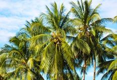 与棕榈树和多云天空的热带风景 可可椰子庭院 库存照片