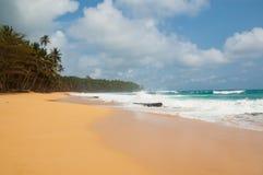 与棕榈树和大浪的热带海滩 免版税库存图片