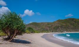 与棕榈树和小山的热带海滩 图库摄影