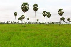 与棕榈树和白色云彩的绿色稻田 图库摄影