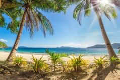 与棕榈树和白色沙子的海滩 图库摄影