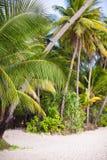 与棕榈树和白色沙子的热带海滩 免版税图库摄影
