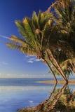与棕榈树和白色沙子的热带海滩 免版税库存图片