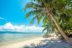 与棕榈树的一个美丽的热带海滩在酸值Phangan海岛 库存图片