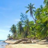 与棕榈树的一个美丽的热带海滩 免版税图库摄影